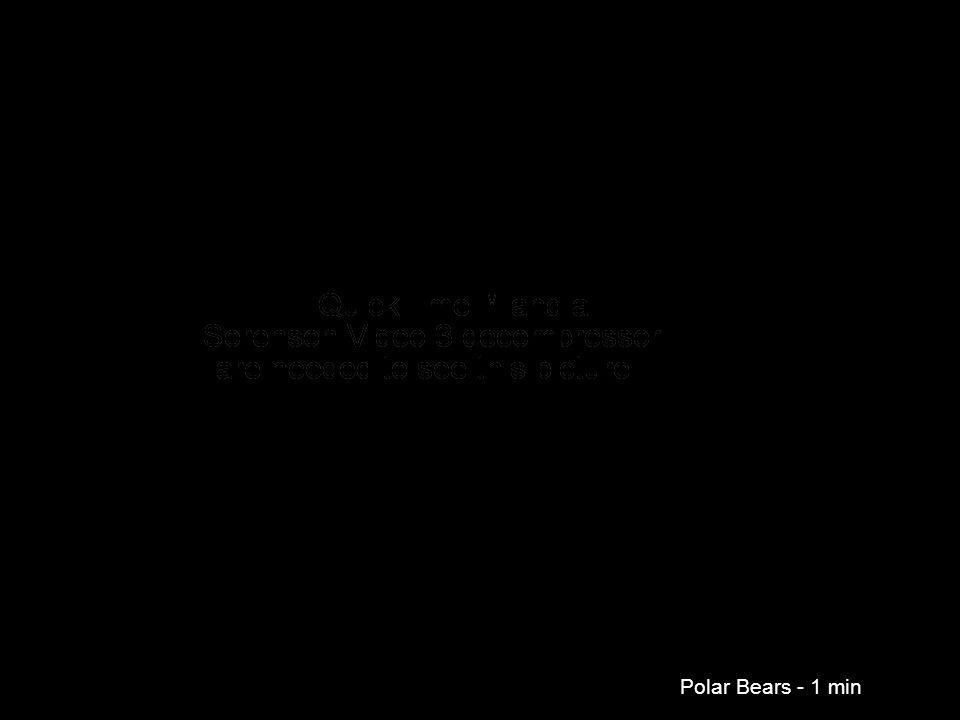 Polar Bears - 1 min