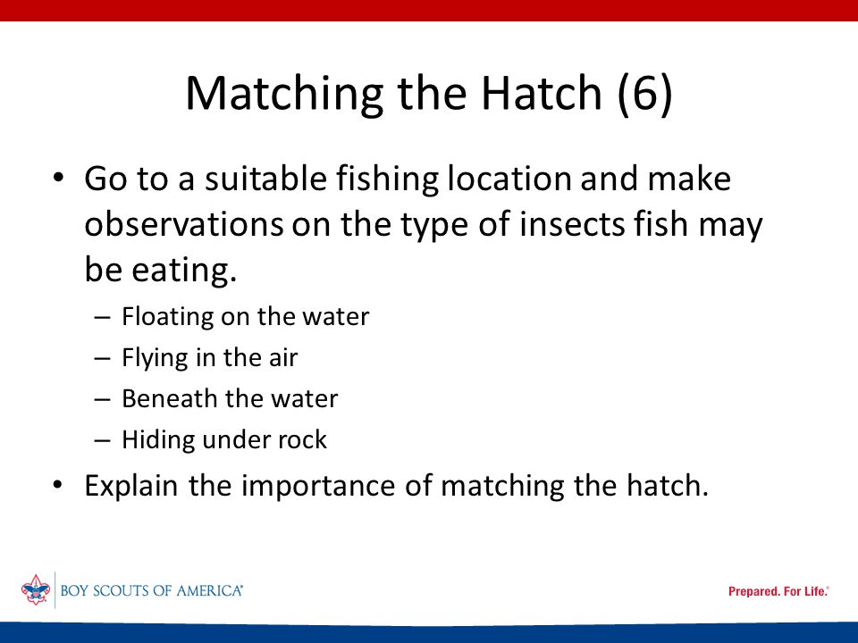Matching the Hatch (6) Go to a suitable fishing location and make observations on the type of insects fish may be eating.