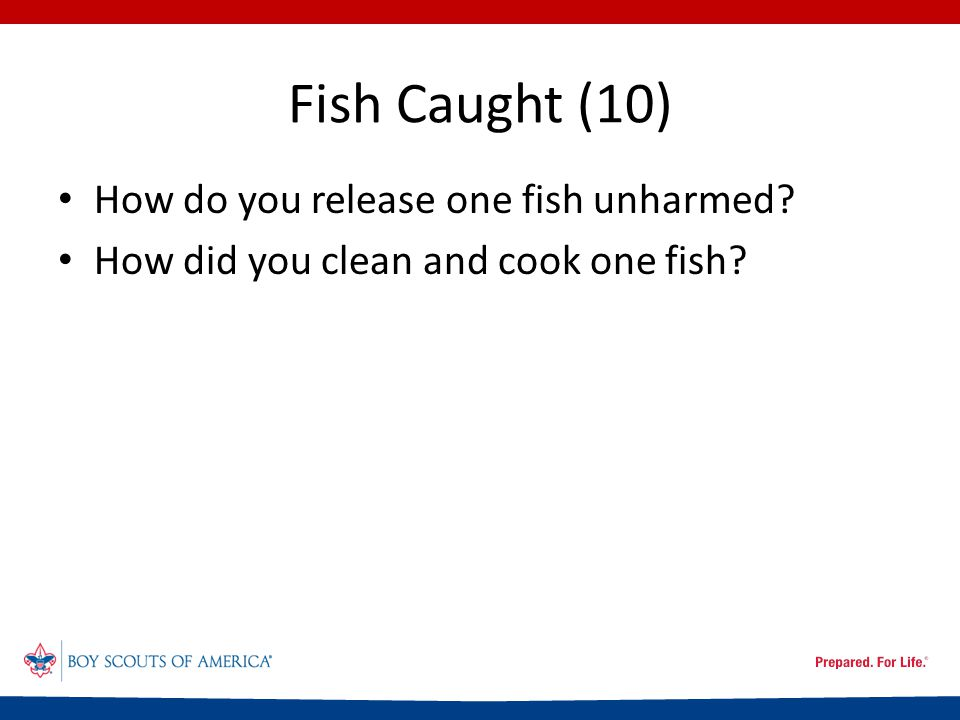 Fish Caught (10) How do you release one fish unharmed How did you clean and cook one fish