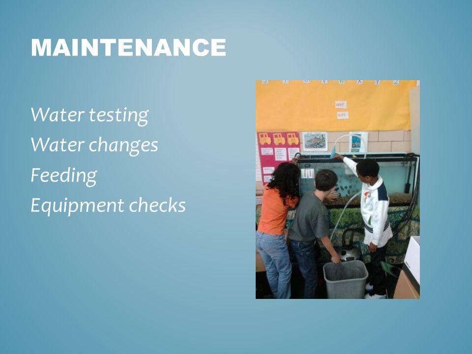 MAINTENANCE Water testing Water changes Feeding Equipment checks