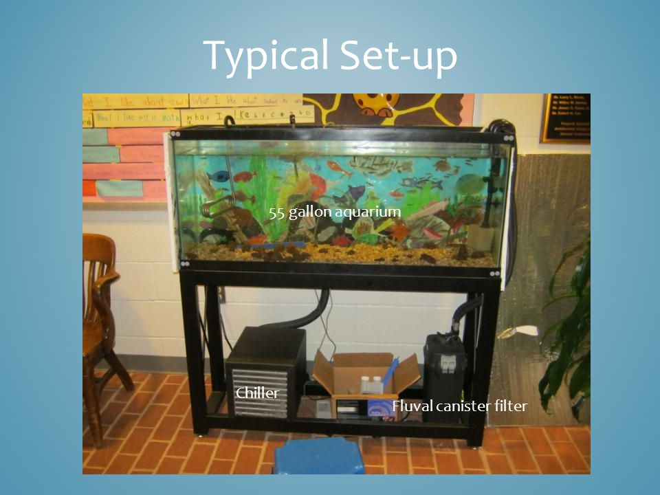 Chiller Fluval canister filter 55 gallon aquarium Typical Set-up