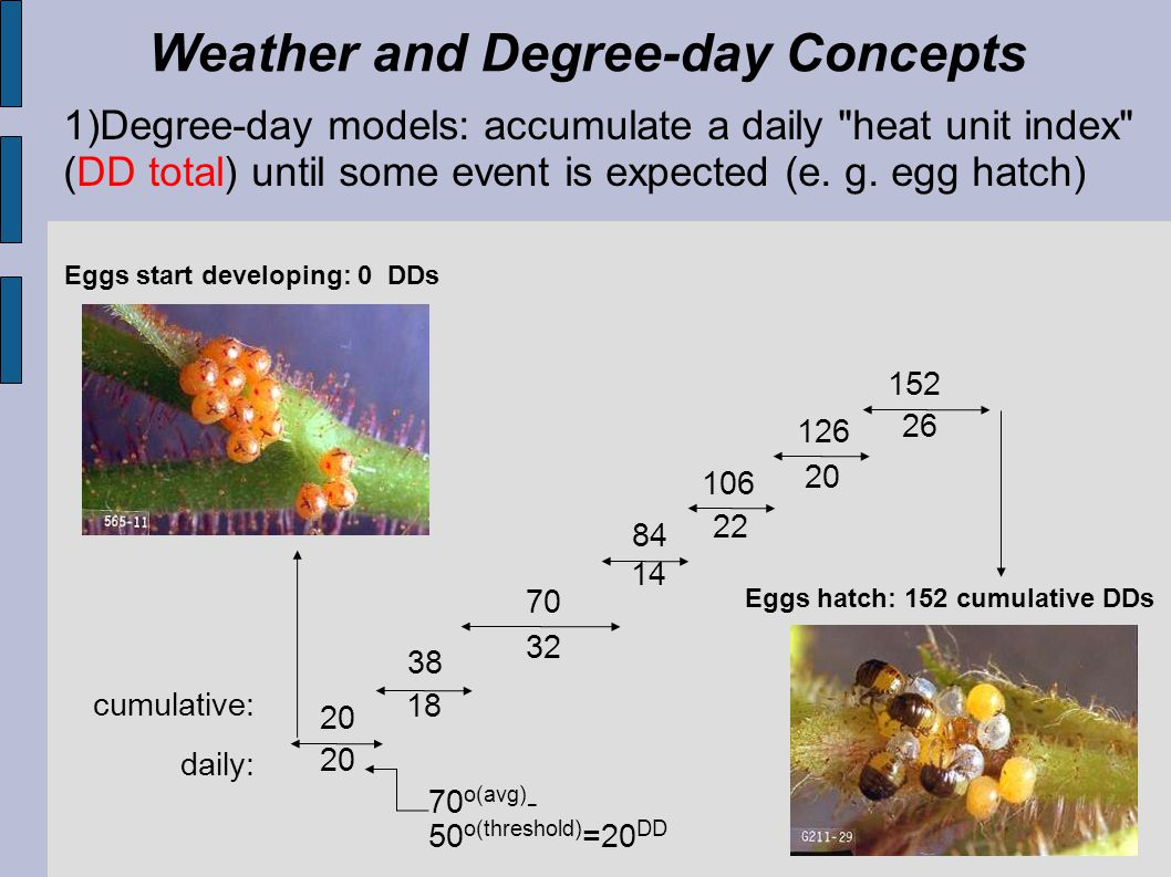 Weather and Degree-day Concepts We assume that development rate is linearly related to temperature above a low threshold temperature Low temperature threshold = 32 o F Graph of typical insect development rate Rate of development is linear over most temperatures
