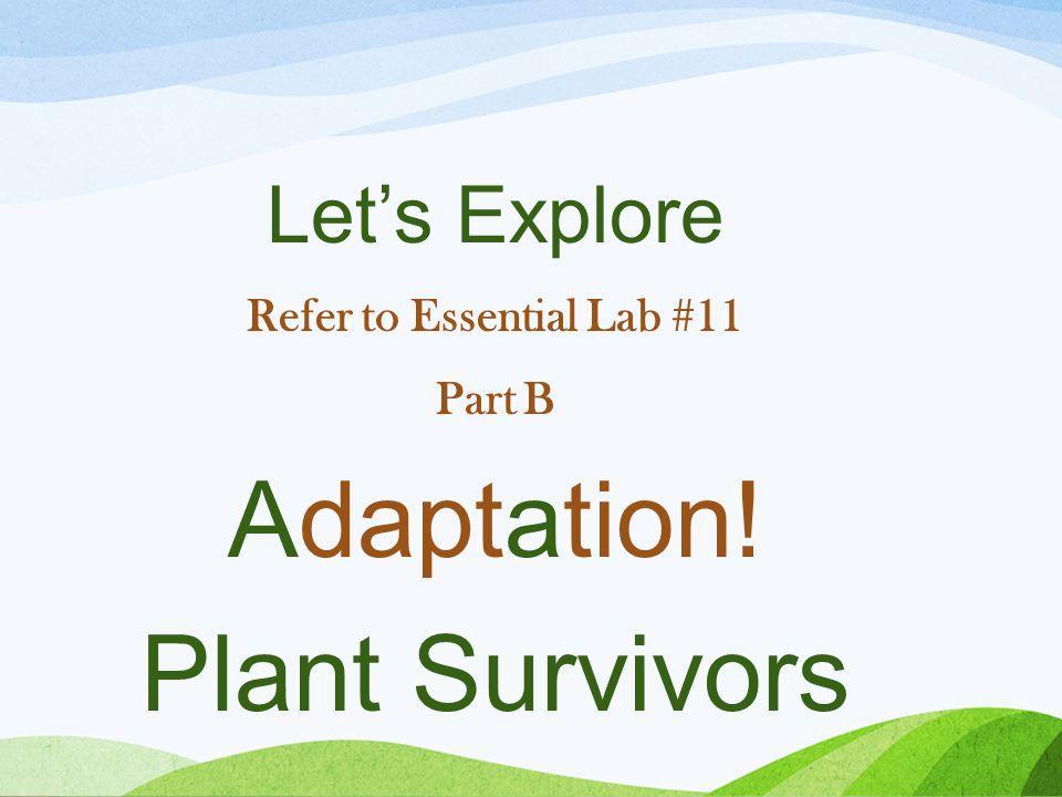 Let's Explore Refer to Essential Lab #11 Part B Adaptation! Plant Survivors