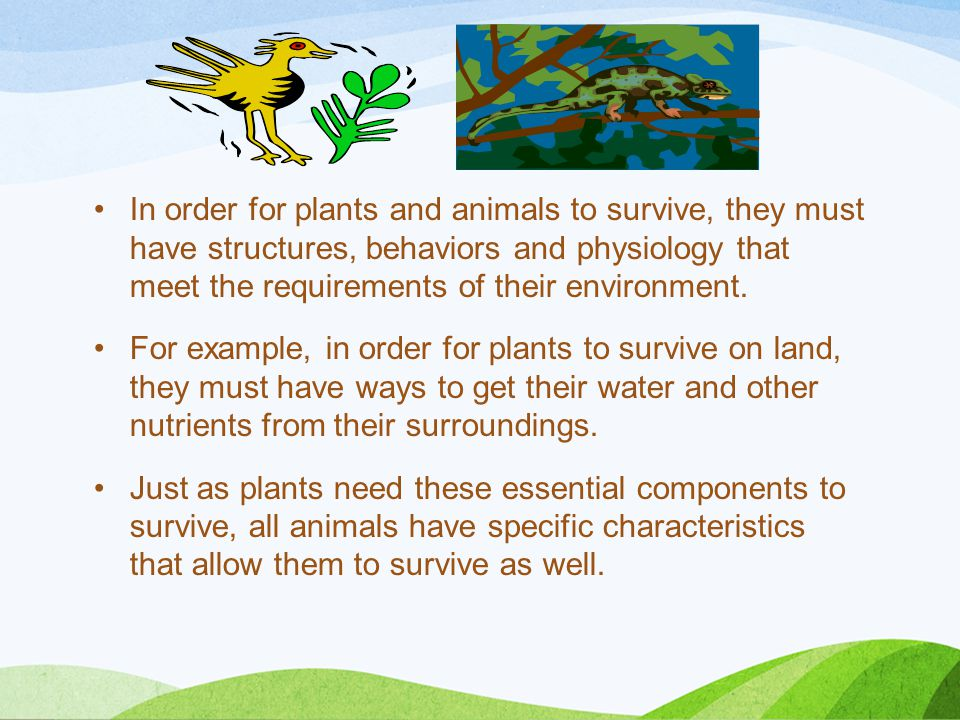 In order for plants and animals to survive, they must have structures, behaviors and physiology that meet the requirements of their environment.