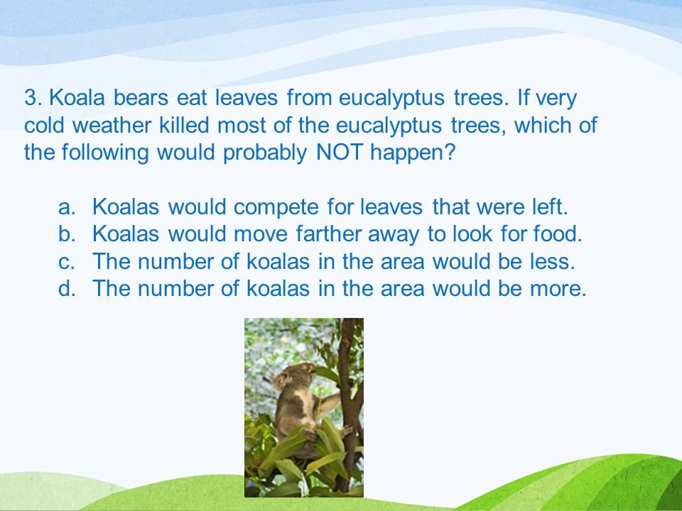 3. Koala bears eat leaves from eucalyptus trees. If very cold weather killed most of the eucalyptus trees, which of the following would probably NOT h