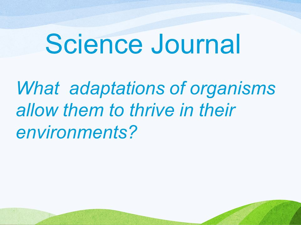 Science Journal What adaptations of organisms allow them to thrive in their environments?