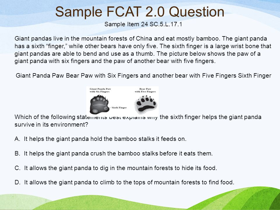 Sample Item 24 SC.5.L.17.1 Giant pandas live in the mountain forests of China and eat mostly bamboo.