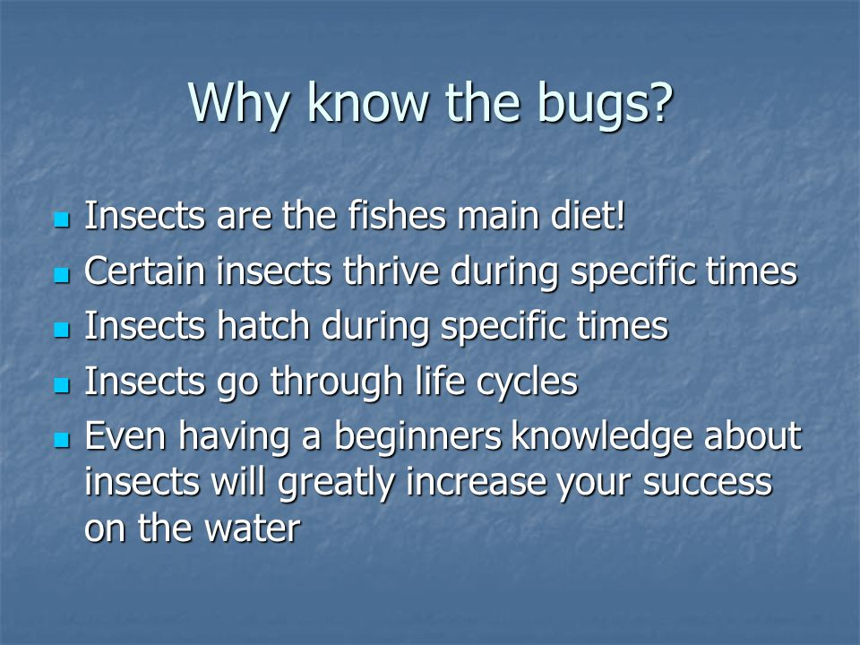 Why know the bugs. Insects are the fishes main diet.
