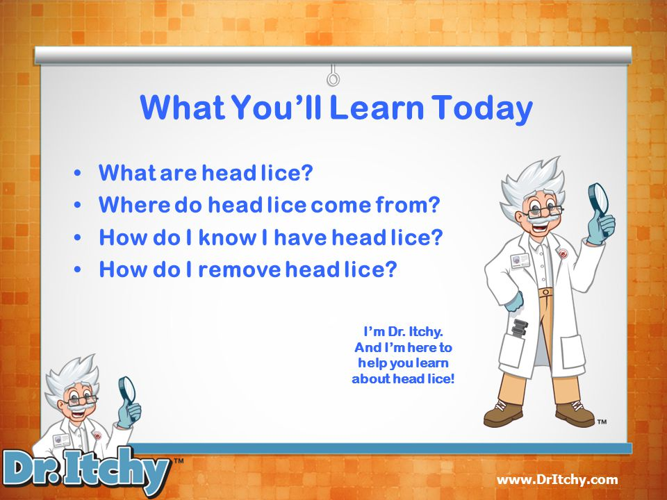 www.DrItchy.com What You'll Learn Today What are head lice.