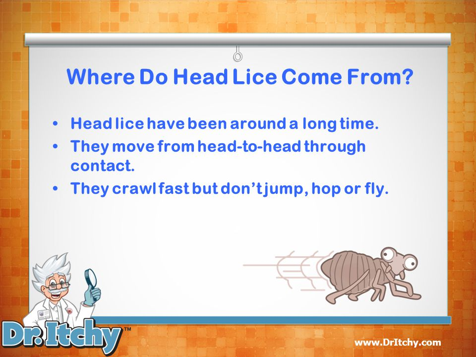 www.DrItchy.com Where Do Head Lice Come From.Head lice have been around a long time.