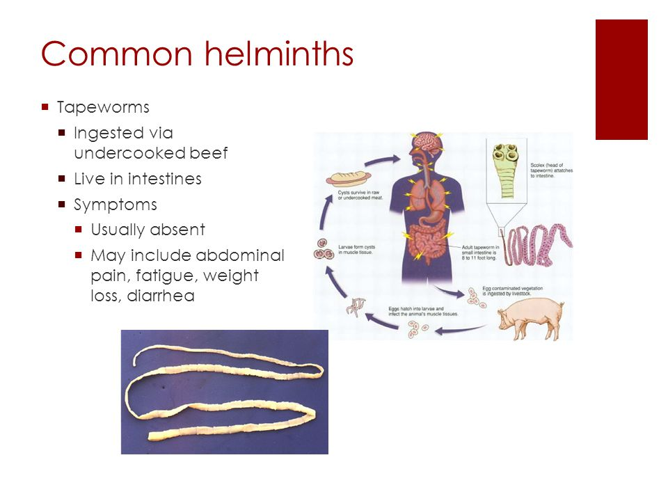 Common helminths  Tapeworms  Ingested via undercooked beef  Live in intestines  Symptoms  Usually absent  May include abdominal pain, fatigue, w