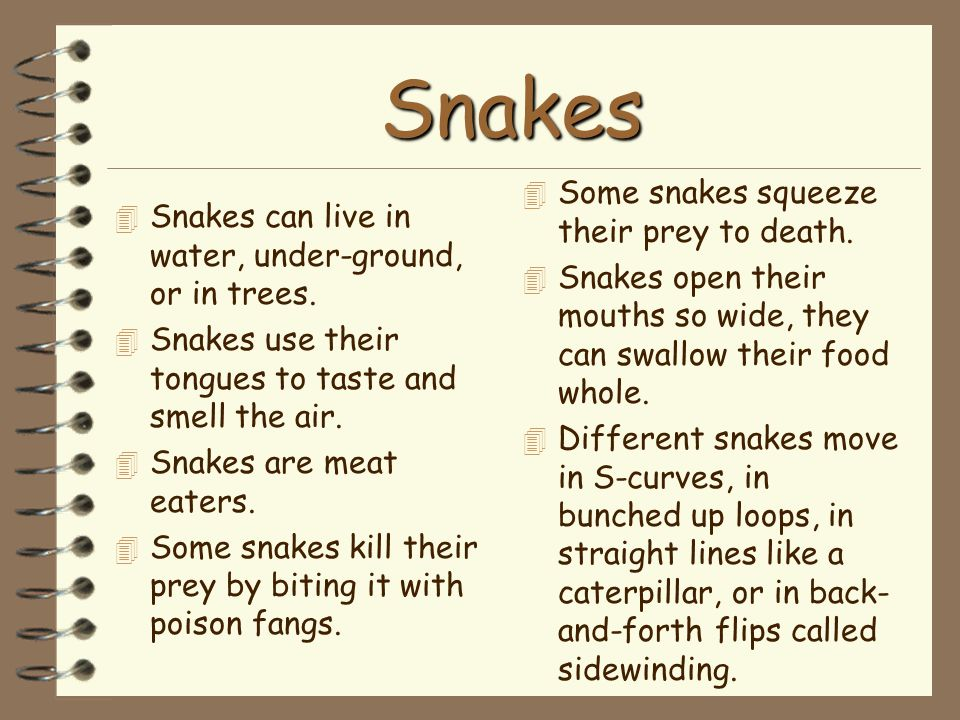 Snakes 4 Snakes can live in water, under-ground, or in trees. 4 Snakes use their tongues to taste and smell the air. 4 Snakes are meat eaters. 4 Some