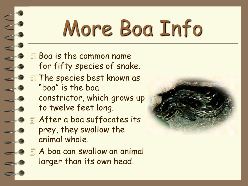 """More Boa Info 4 Boa is the common name for fifty species of snake. 4 The species best known as """"boa"""" is the boa constrictor, which grows up to twelve"""