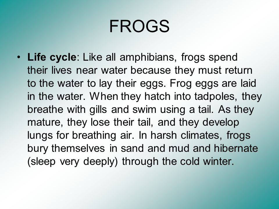 FROGS Life cycle: Like all amphibians, frogs spend their lives near water because they must return to the water to lay their eggs. Frog eggs are laid