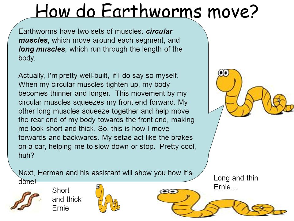 How do Earthworms move? Earthworms have two sets of muscles: circular muscles, which move around each segment, and long muscles, which run through the