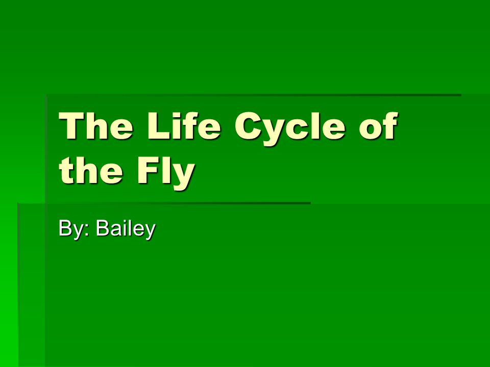 The Life Cycle of the Fly By: Bailey