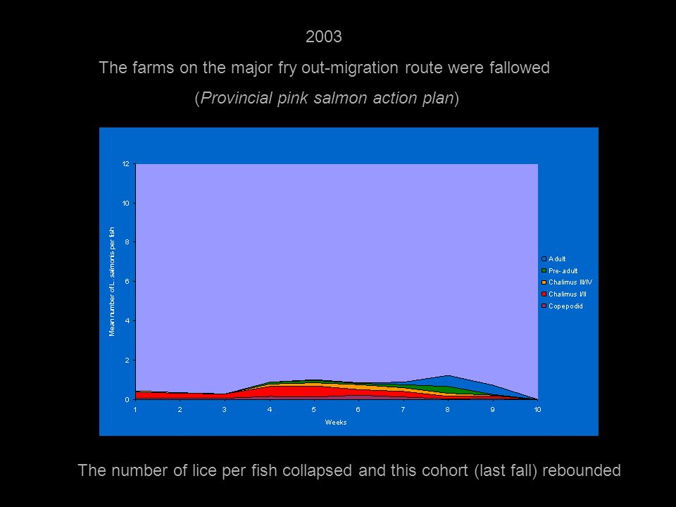 2003 The farms on the major fry out-migration route were fallowed (Provincial pink salmon action plan) The number of lice per fish collapsed and this