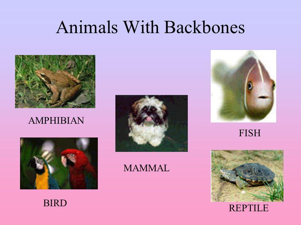 Classification of Animals