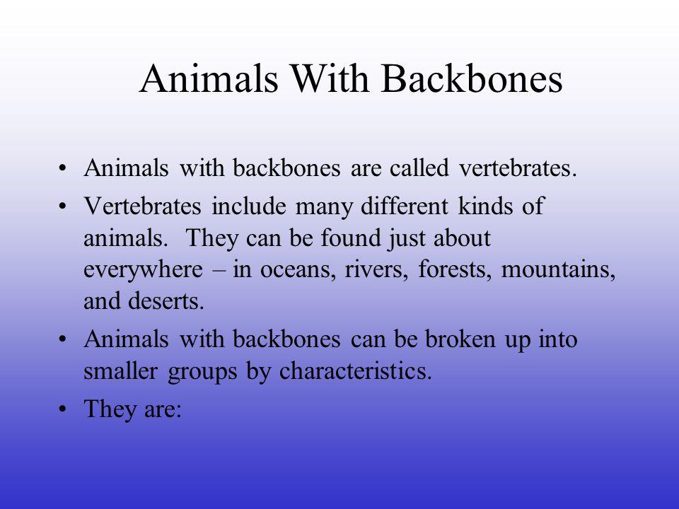 Animals With Backbones MAMMAL FISH REPTILE BIRD AMPHIBIAN