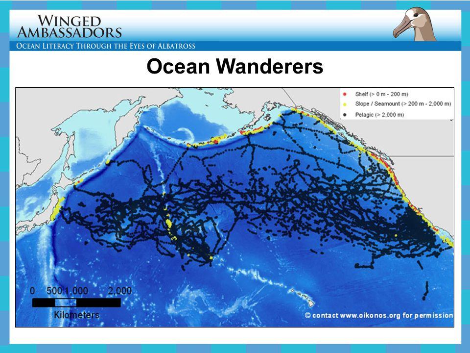 Ocean Wanderers