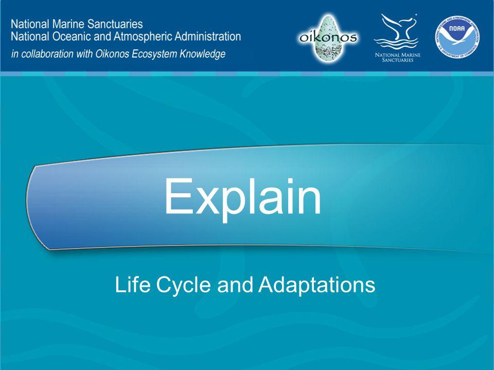 Explain Life Cycle and Adaptations