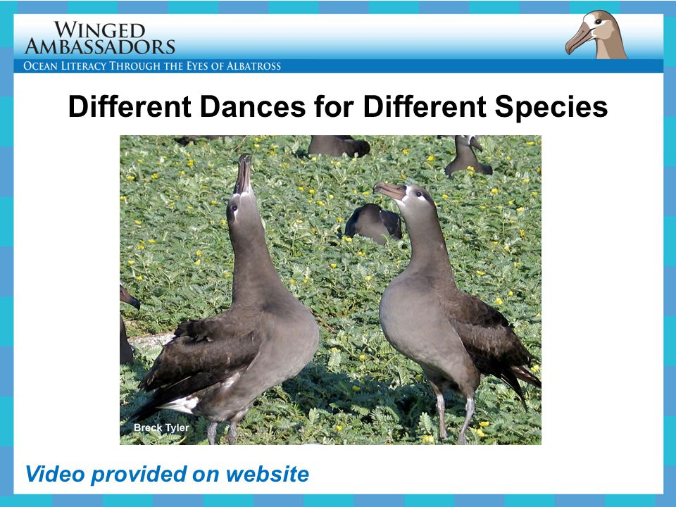 Different Dances for Different Species Video provided on website