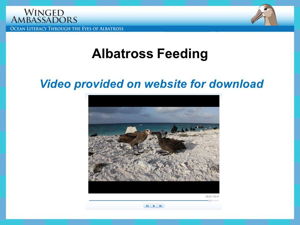 Video provided on website for download Albatross Feeding