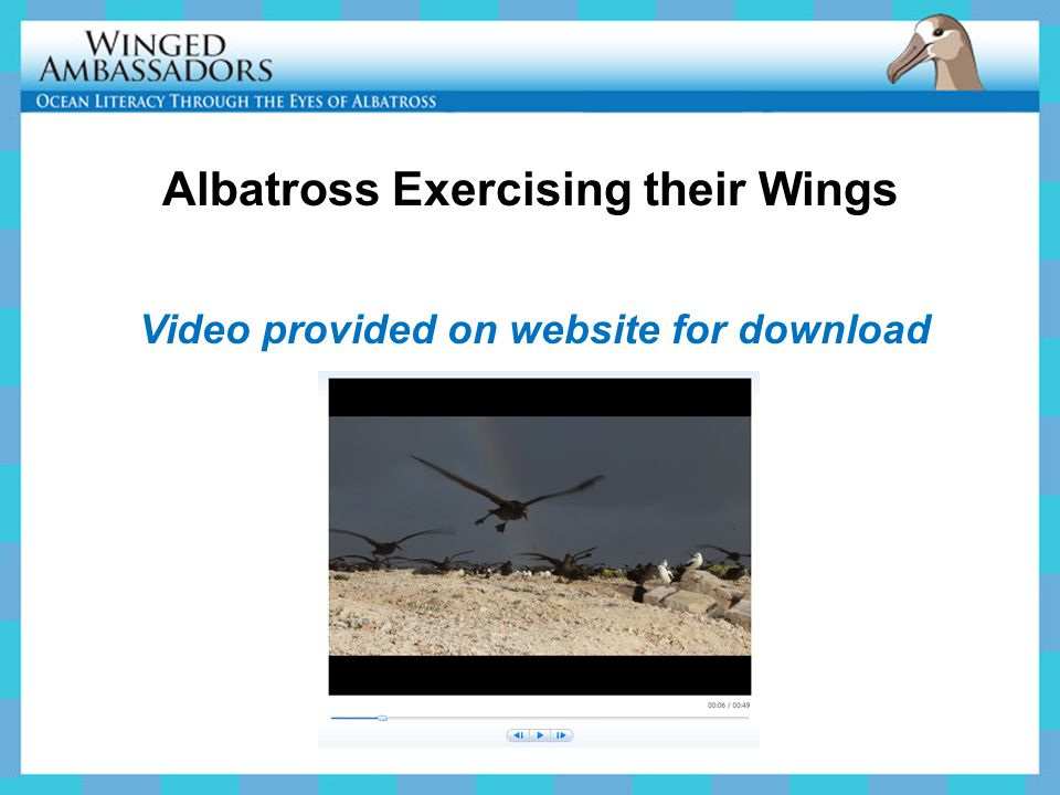 Video provided on website for download Albatross Exercising their Wings