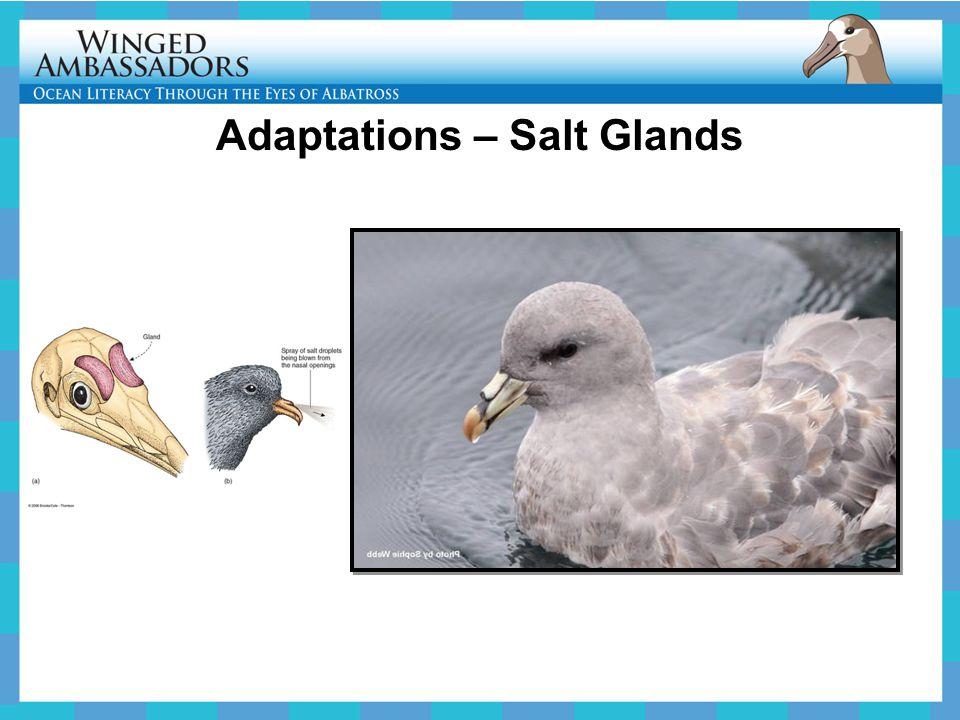 Adaptations – Salt Glands