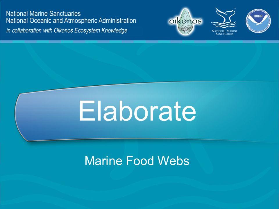 Elaborate Marine Food Webs