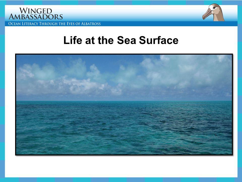 Life at the Sea Surface
