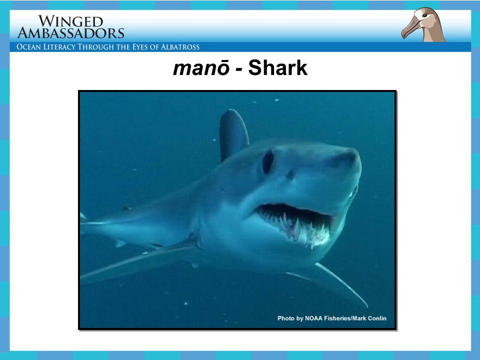 manō - Shark