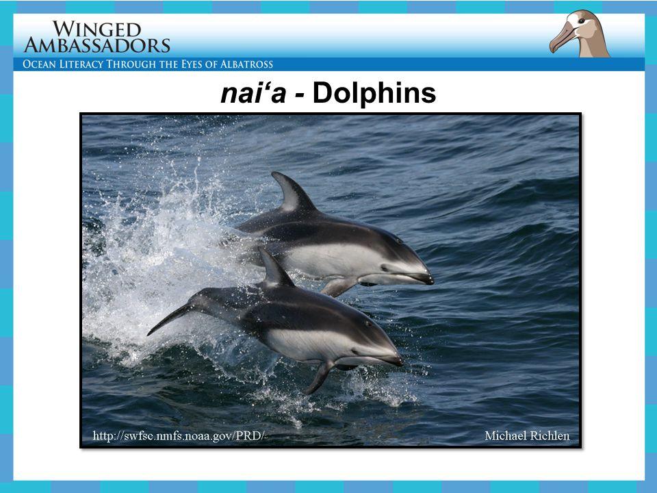 nai'a - Dolphins