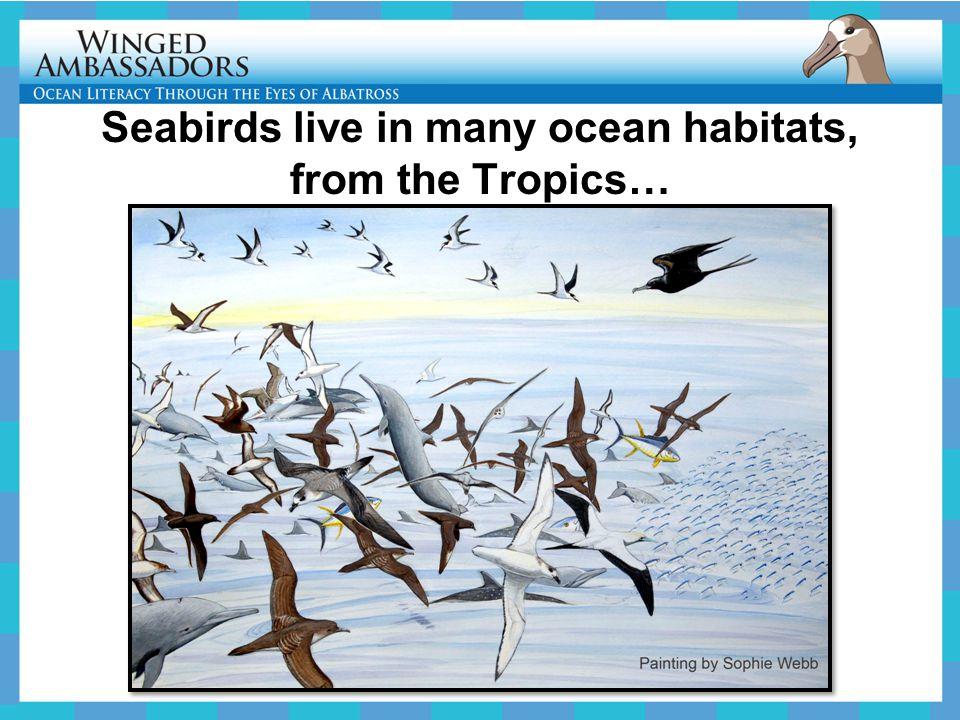 Seabirds live in many ocean habitats, from the Tropics…