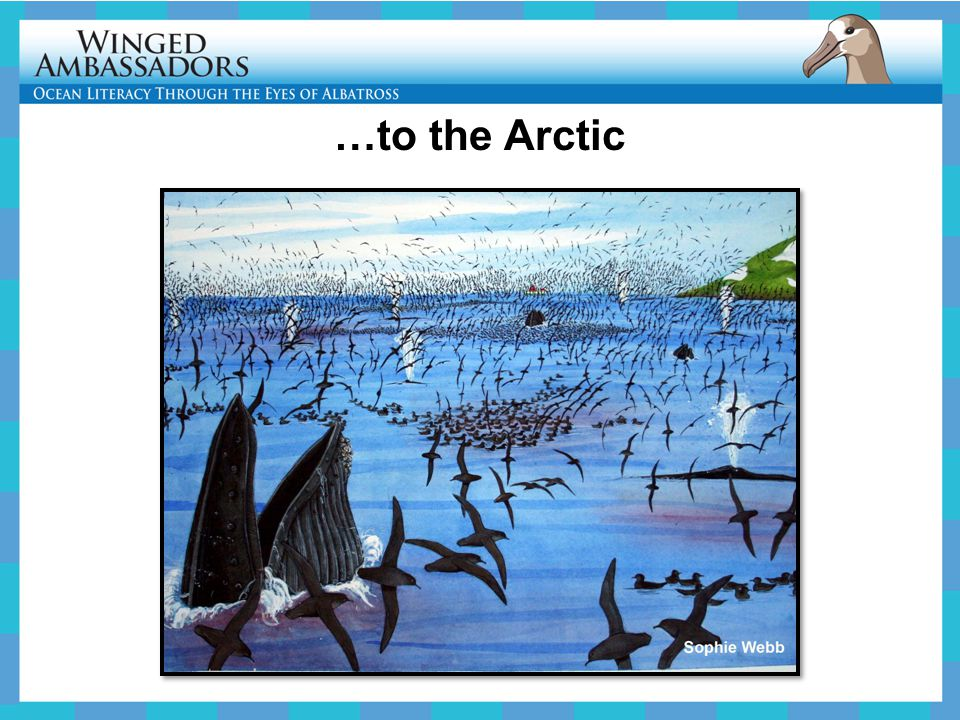 …to the Arctic