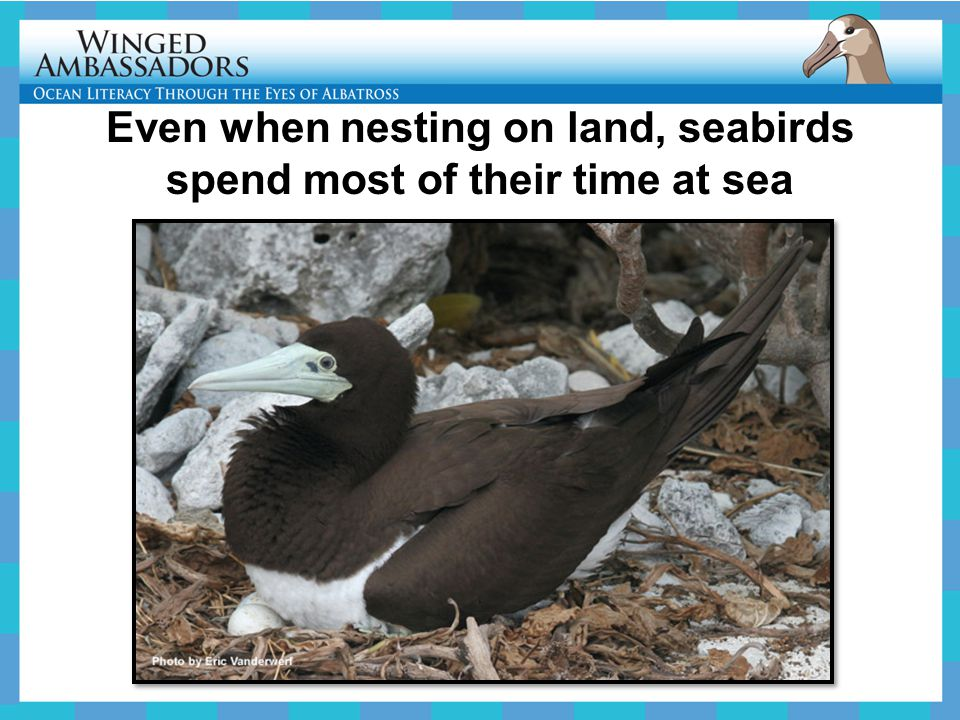 Even when nesting on land, seabirds spend most of their time at sea
