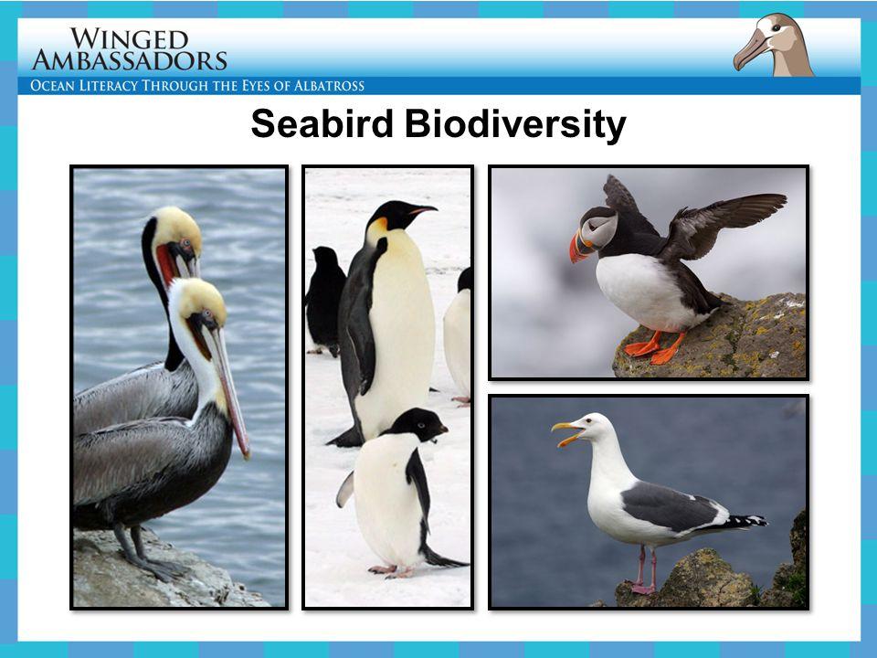 Seabird Biodiversity