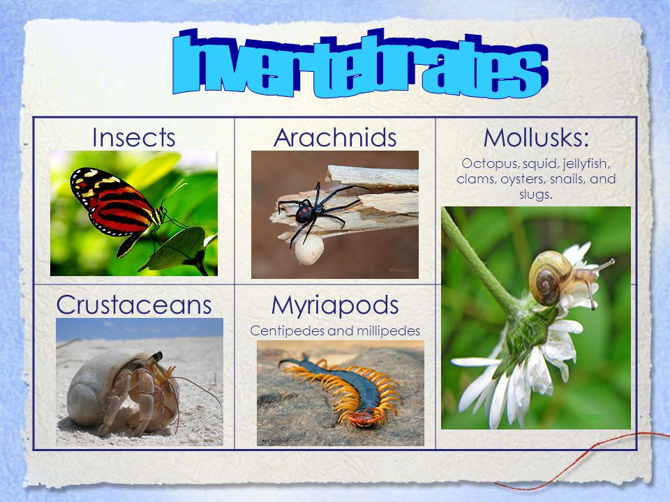 Vertebrates have a backbone and invertebrates do not. Without a backbone, a vertebrate's body would collapse! The largest animals in the world are ver