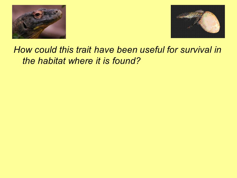 How could this trait have been useful for survival in the habitat where it is found?