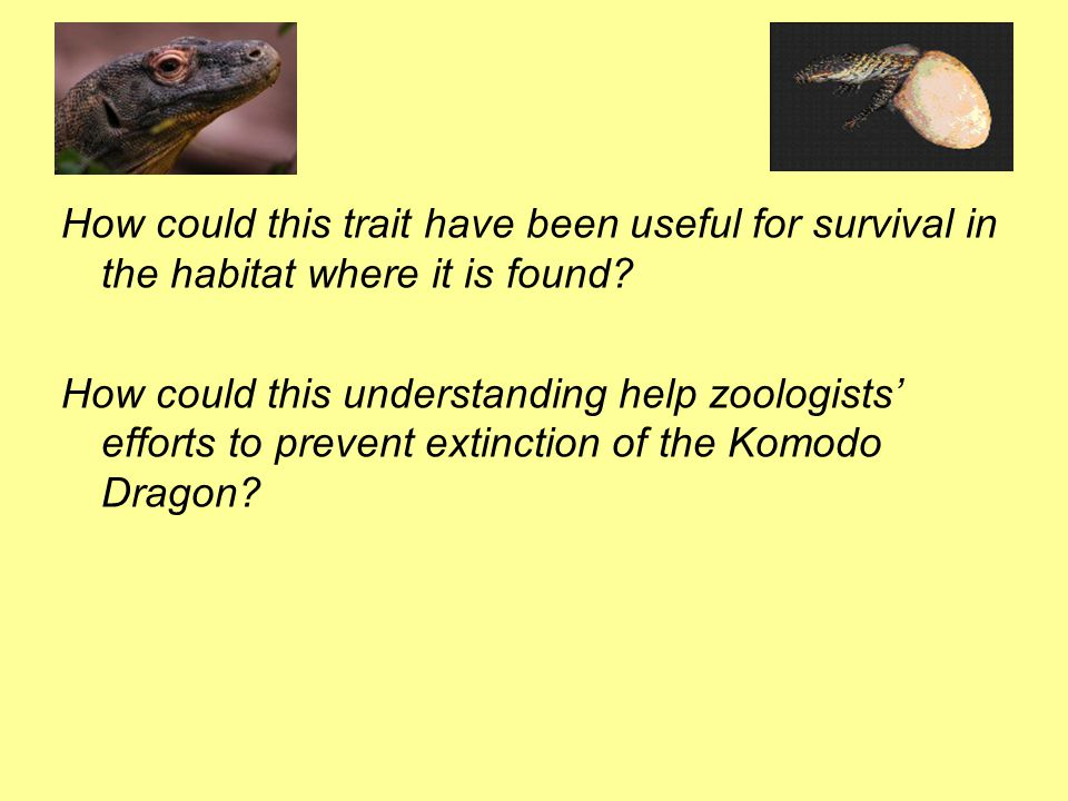 How could this trait have been useful for survival in the habitat where it is found.