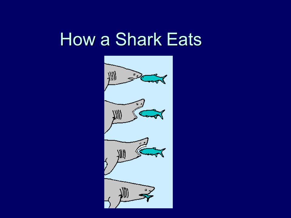 How a Shark Eats