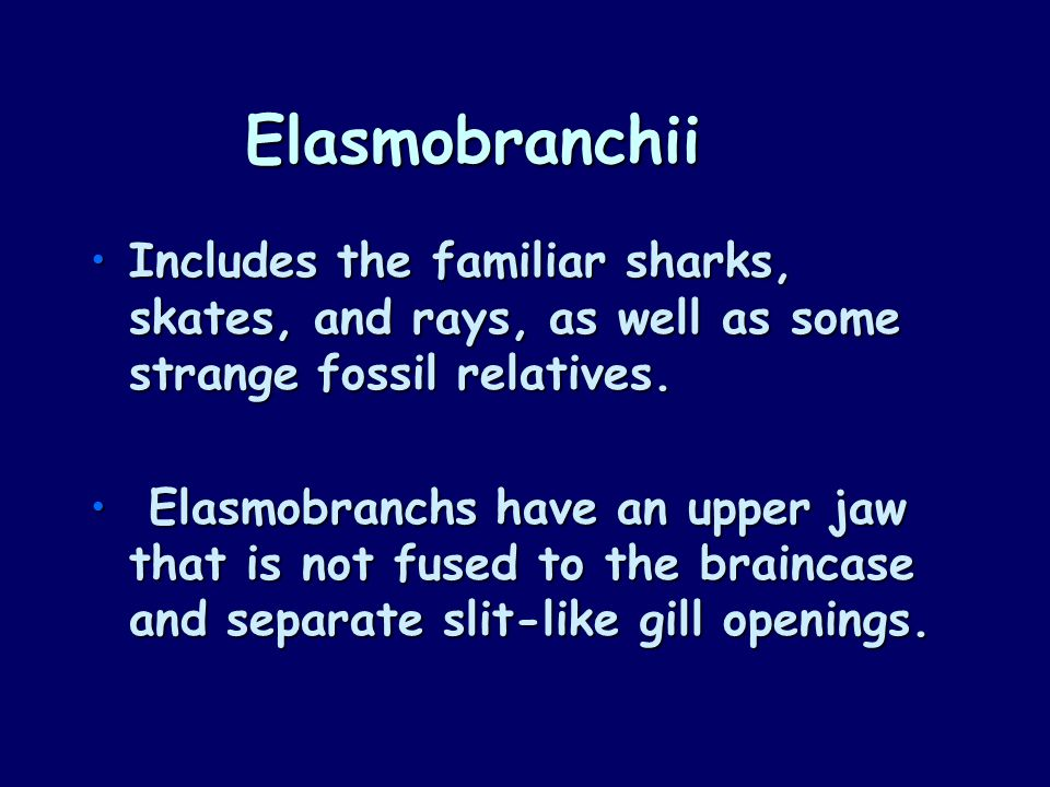 Elasmobranchii Includes the familiar sharks, skates, and rays, as well as some strange fossil relatives.Includes the familiar sharks, skates, and rays, as well as some strange fossil relatives.