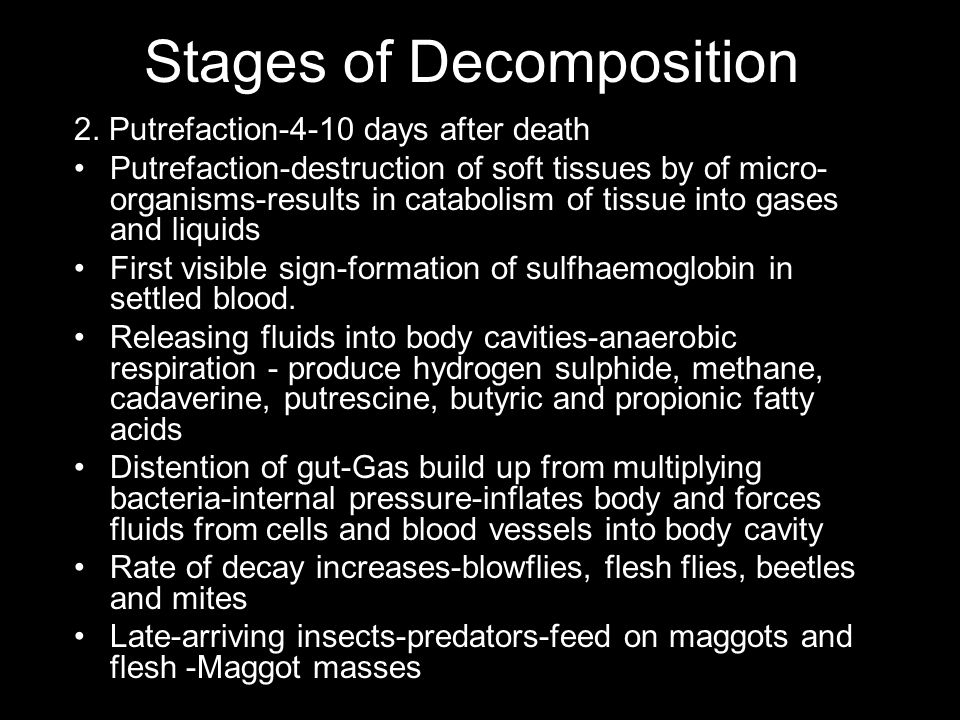 Stages of Decomposition 2. Putrefaction-4-10 days after death Putrefaction-destruction of soft tissues by of micro- organisms-results in catabolism of