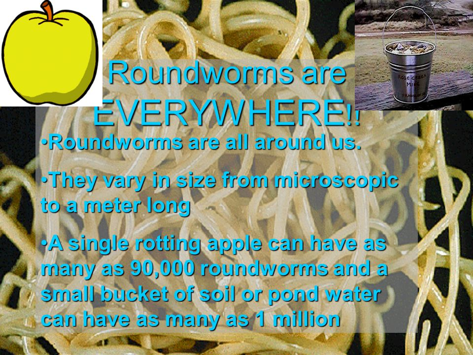 Roundworms are EVERYWHERE !.Roundworms are all around us.Roundworms are all around us.