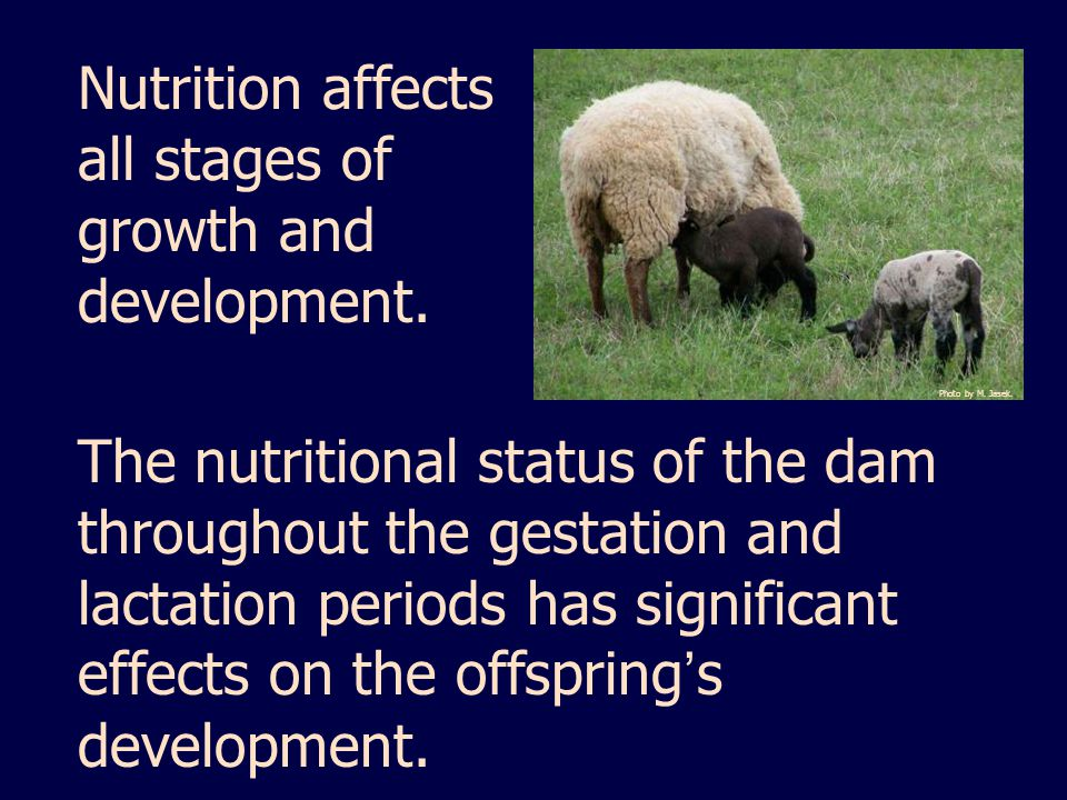 Nutrition affects all stages of growth and development.
