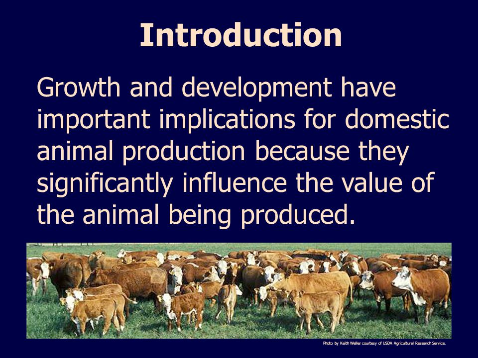 Introduction Growth and development have important implications for domestic animal production because they significantly influence the value of the animal being produced.