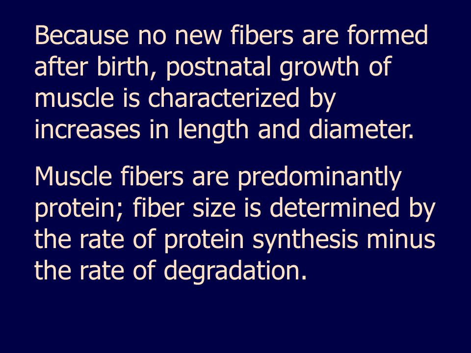 Because no new fibers are formed after birth, postnatal growth of muscle is characterized by increases in length and diameter.