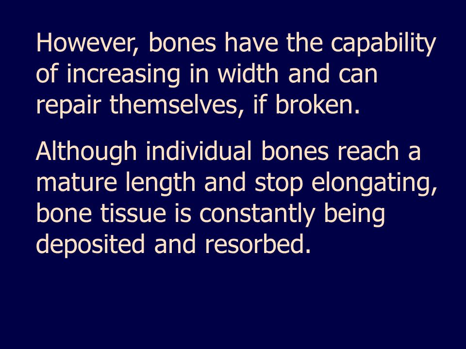 However, bones have the capability of increasing in width and can repair themselves, if broken.