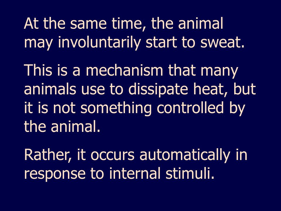 At the same time, the animal may involuntarily start to sweat.