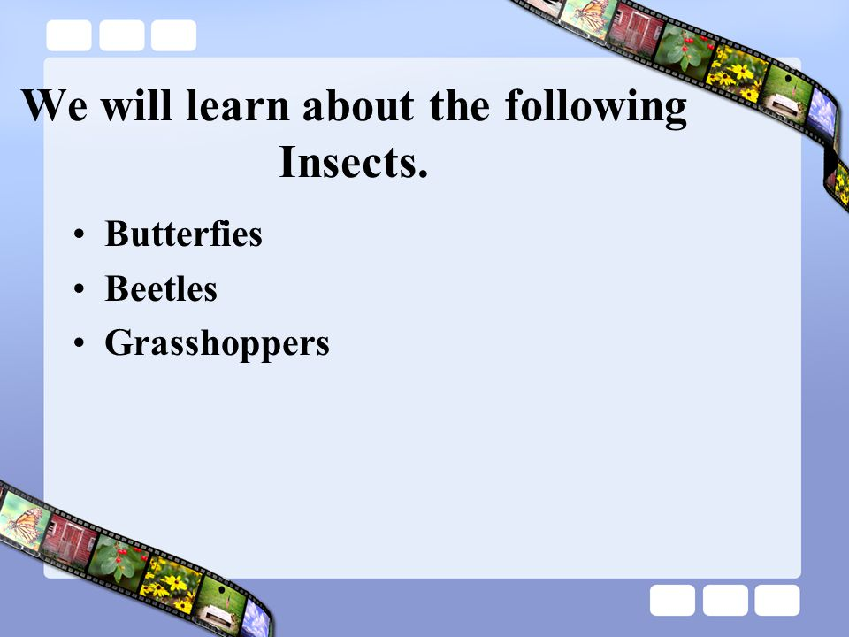 We will learn about the following Insects. Butterfies Beetles Grasshoppers